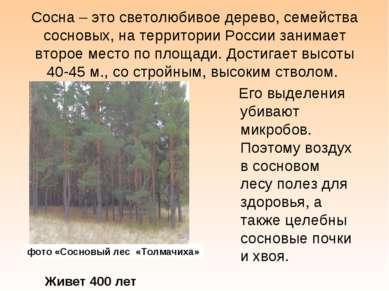 Сосна – это светолюбивое дерево, семейства сосновых, на территории России зан...