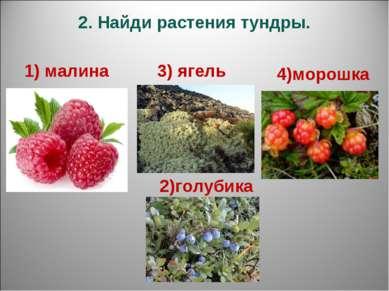 2. Найди растения тундры. 1) малина 3) ягель 2)голубика 4)морошка