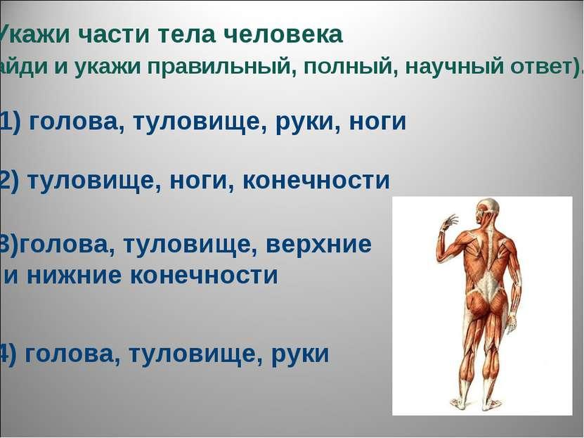 3.Укажи части тела человека (найди и укажи правильный, полный, научный ответ)...