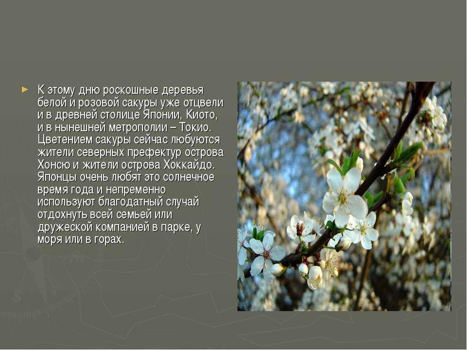 К этому дню роскошные деревья белой и розовой сакуры уже отцвели и в древней ...