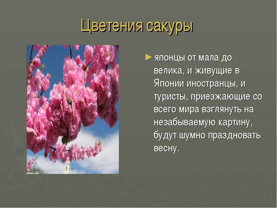 Цветения сакуры японцы от мала до велика, и живущие в Японии иностранцы, и ту...
