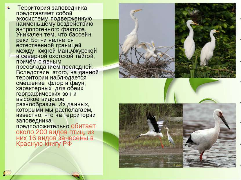 Территория заповедника представляет собой экосистему, подверженную наименьшем...