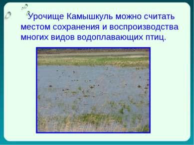 1 Урочище Камышкуль можно считать местом сохранения и воспроизводства многих ...