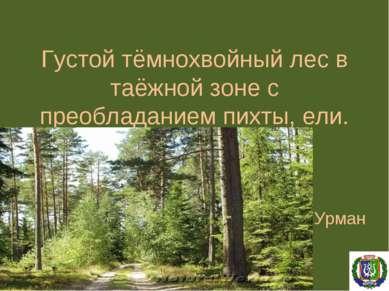 Густой тёмнохвойный лес в таёжной зоне с преобладанием пихты, ели. Урман