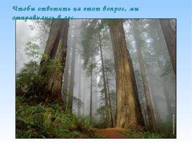Чтобы ответить на этот вопрос, мы отправились в лес.