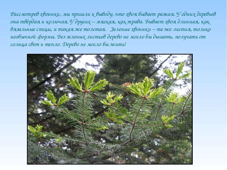 Рассмотрев хвоинки, мы пришли к выводу, что хвоя бывает разная. У одних дерев...