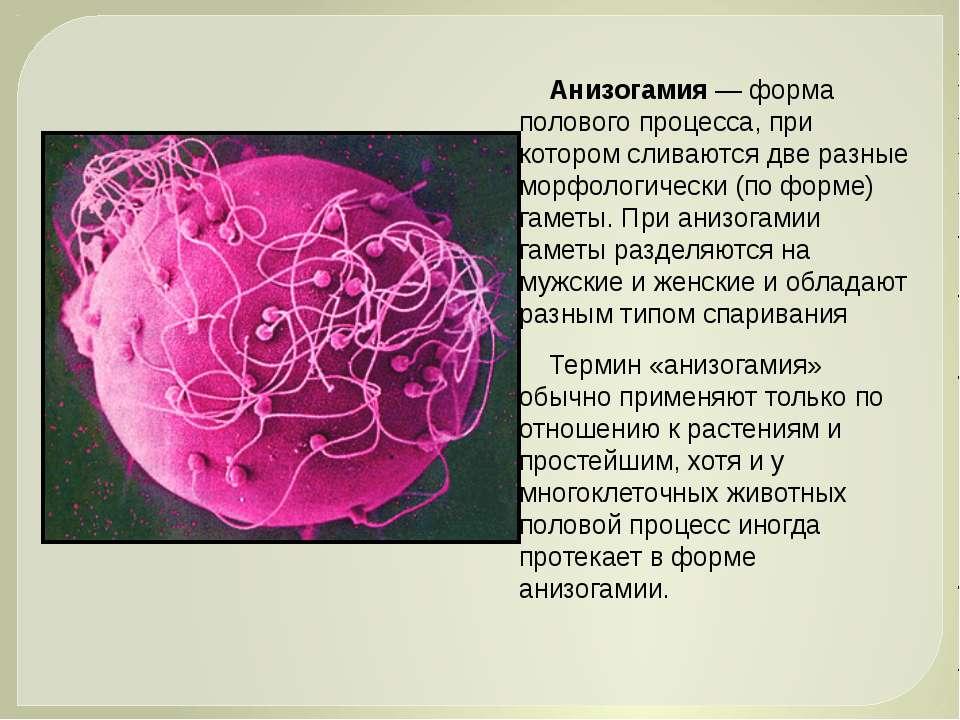 Анизогамия— форма полового процесса, при котором сливаются две разные морфол...
