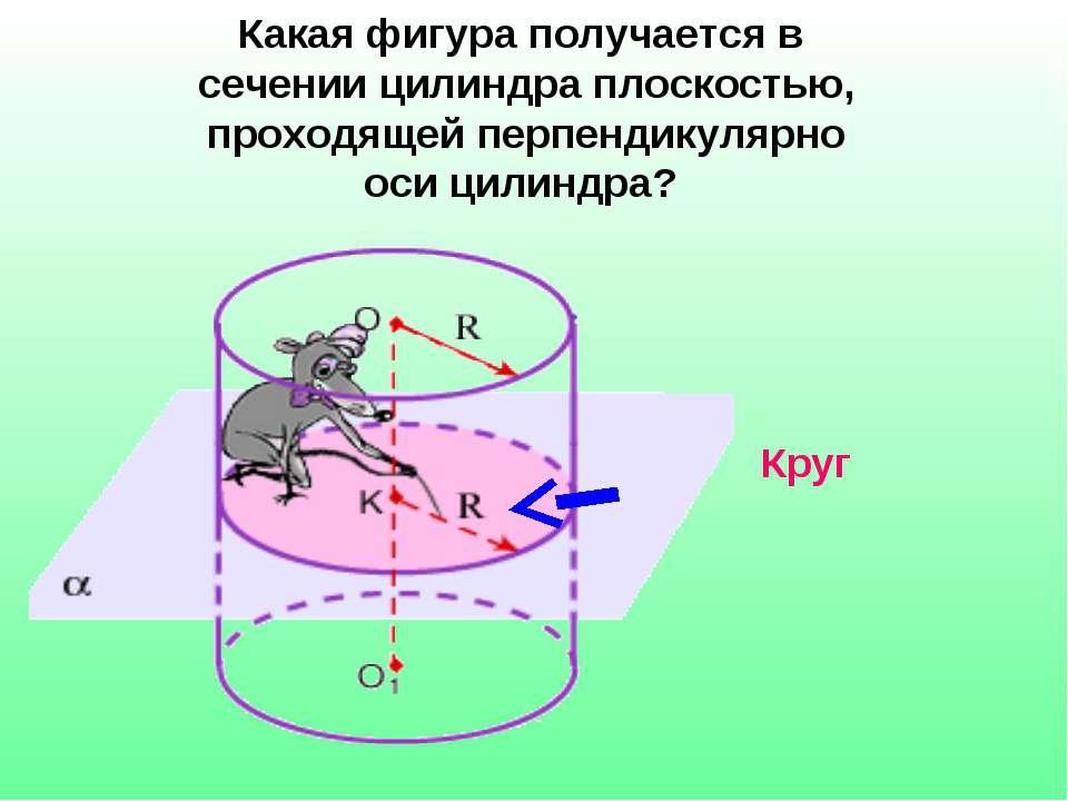 Какая фигура получается в сечении цилиндра плоскостью, проходящей перпендикул...