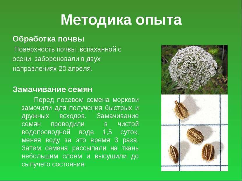 Методика опыта Обработка почвы Поверхность почвы, вспаханной с осени, заборон...