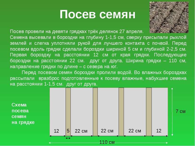 Посев семян Посев провели на девяти грядках трёх делянок 27 апреля. Семена вы...