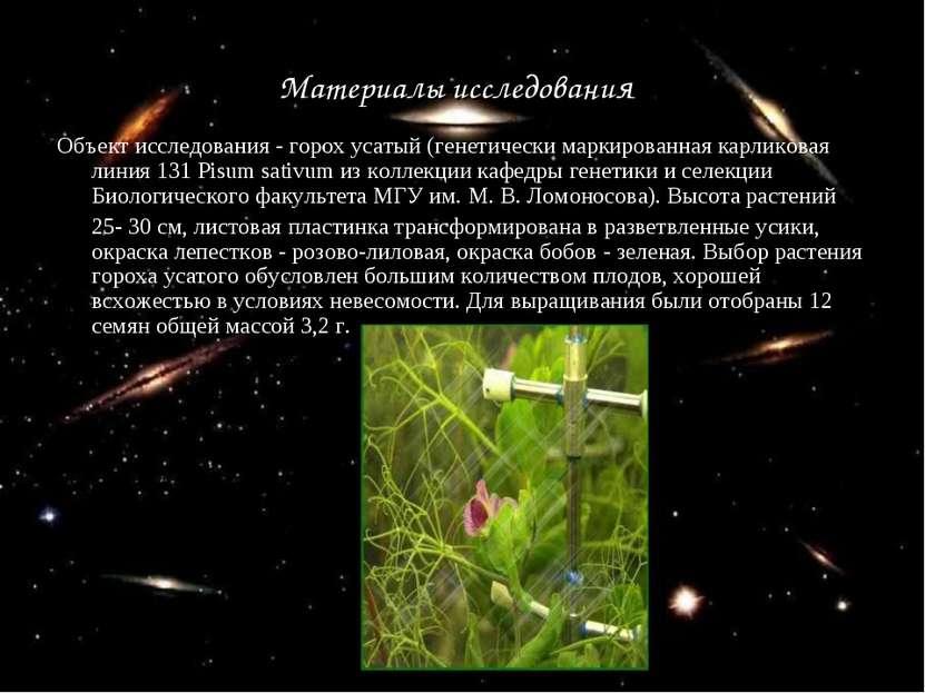 Материалы исследования Объект исследования - горох усатый (генетически маркир...