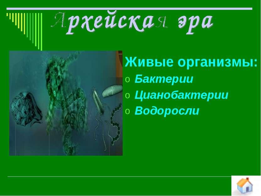 Живые организмы: Бактерии Цианобактерии Водоросли