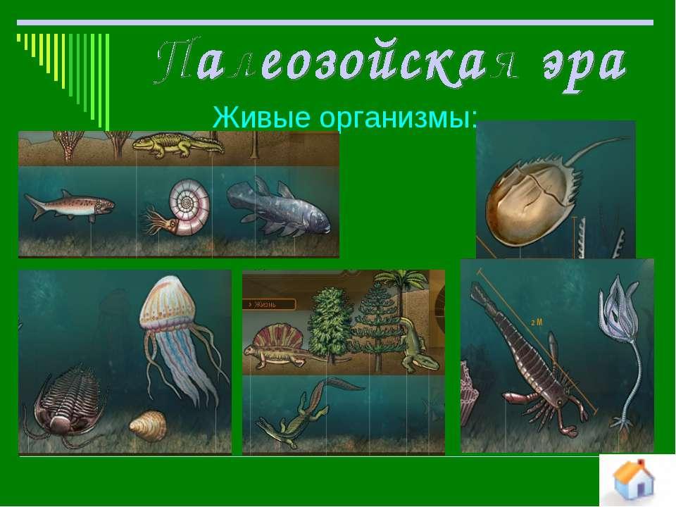 Живые организмы: