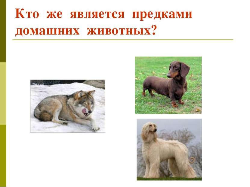 Кто же является предками домашних животных?
