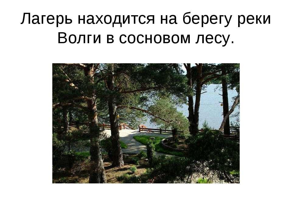 Лагерь находится на берегу реки Волги в сосновом лесу.