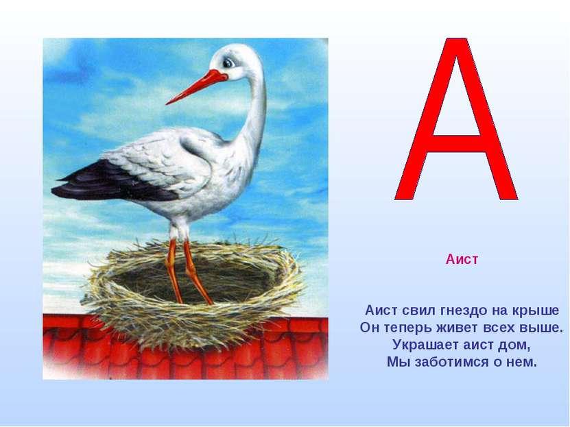 Аист Аист свил гнездо на крыше Он теперь живет всех выше. Украшает аист дом, ...