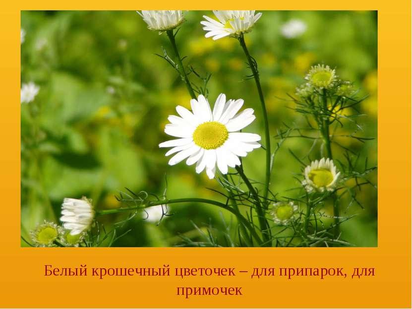 Белый крошечный цветочек – для припарок, для примочек