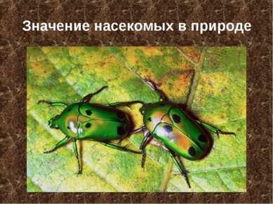 Значение насекомых в природе