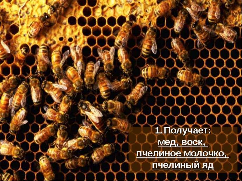 Получает: мед, воск, пчелиное молочко, пчелиный яд