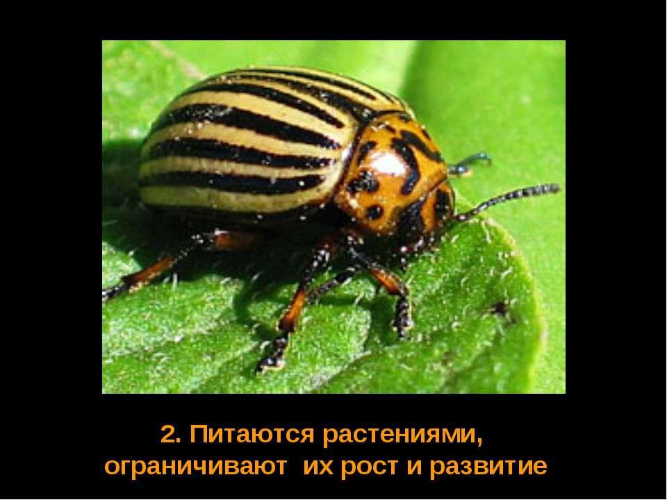 2. Питаются растениями, ограничивают их рост и развитие