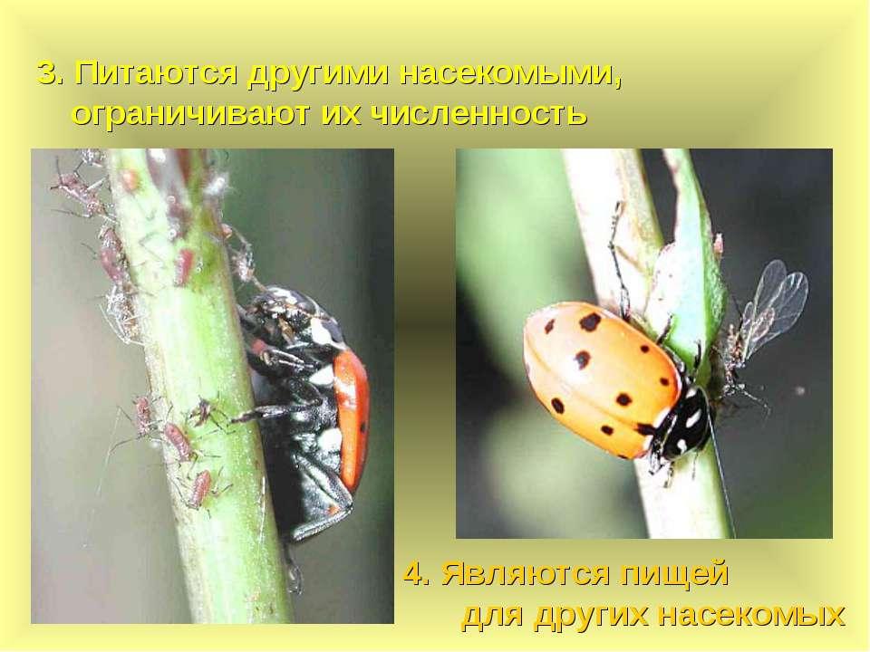 3. Питаются другими насекомыми, ограничивают их численность 4. Являются пищей...