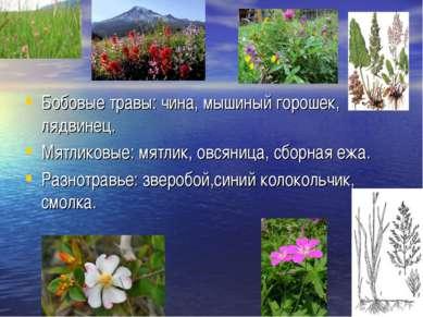 Бобовые травы: чина, мышиный горошек, лядвинец. Мятликовые: мятлик, овсяница,...