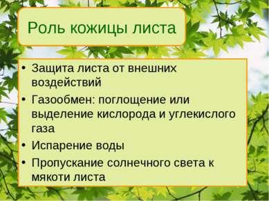 Защита листа от внешних воздействий Газообмен: поглощение или выделение кисло...