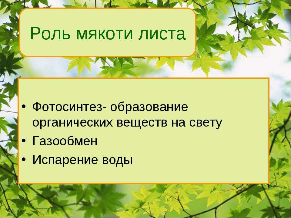 Фотосинтез- образование органических веществ на свету Газообмен Испарение вод...
