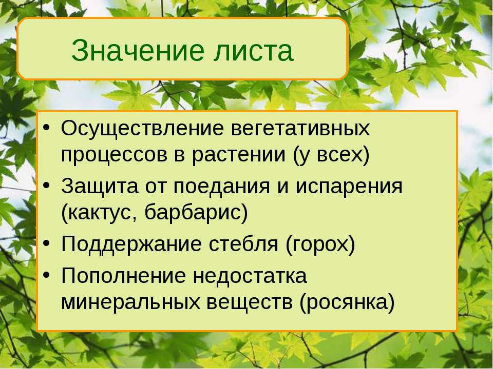 Осуществление вегетативных процессов в растении (у всех) Защита от поедания и...