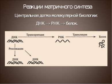 Центральная догма молекулярной биологии: ДНК РНК белок. Реакции матричного си...