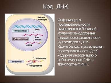 Информация о последовательности аминокислот в белковой молекуле закодирована ...