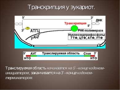 Транслируемая область начинается на 5'–конце кодоном-инициатором, заканчивает...