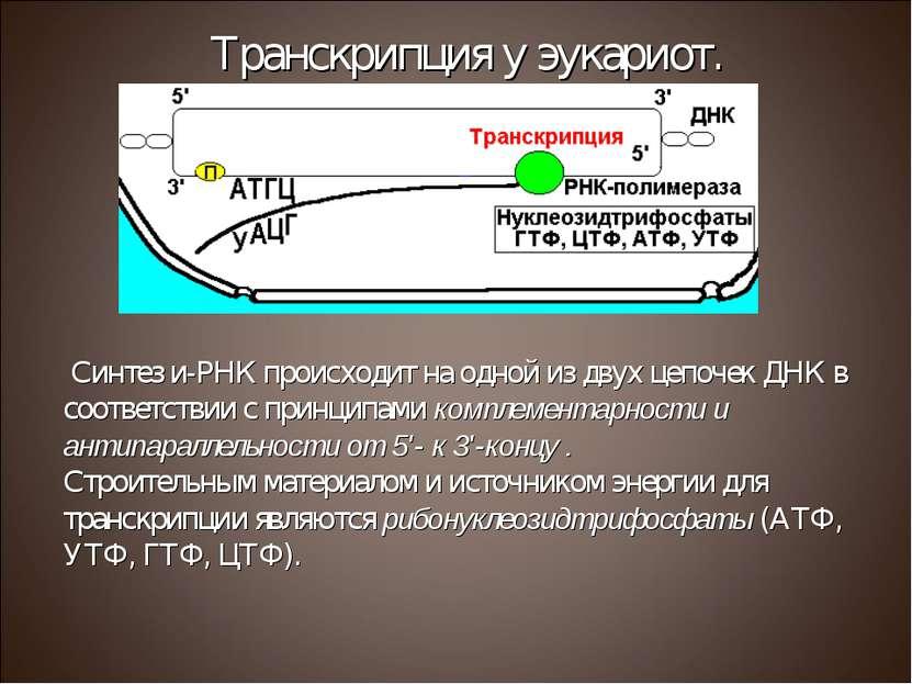 Синтез и-РНК происходит на одной из двух цепочек ДНК в соответствии с принцип...
