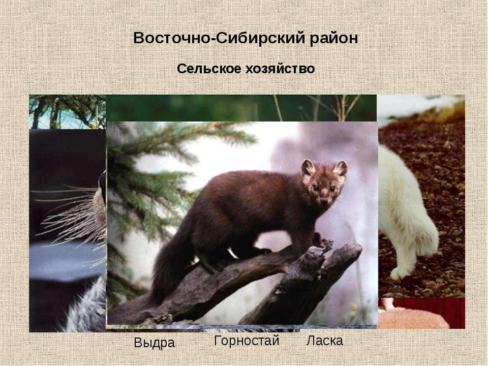 Восточно-Сибирский район Сельское хозяйство С/х земли составляют 6% от площад...