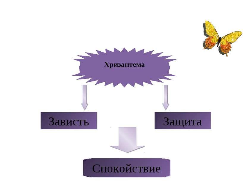 Хризантема Зависть Защита Спокойствие