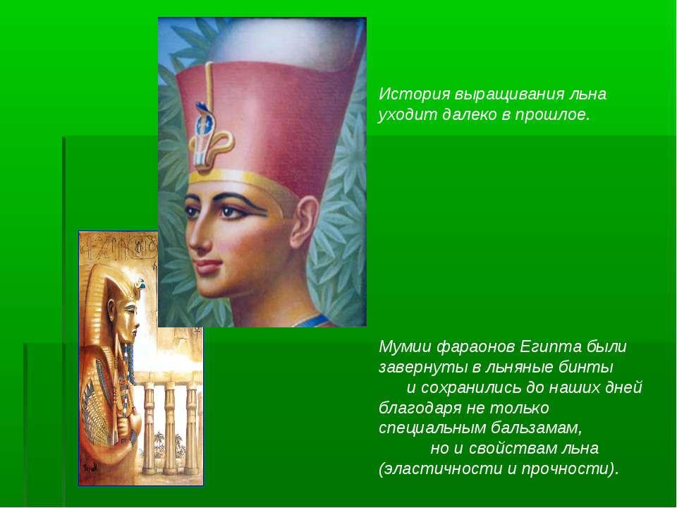 Мумии фараонов Египта были завернуты в льняные бинты и сохранились до наших д...