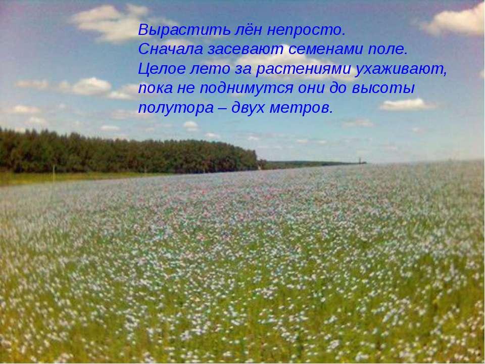 Вырастить лён непросто. Сначала засевают семенами поле. Целое лето за растени...