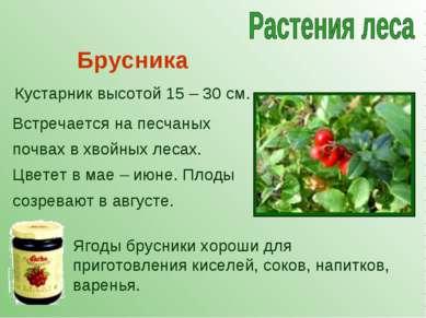Брусника Кустарник высотой 15 – 30 см. Встречается на песчаных почвах в хвойн...
