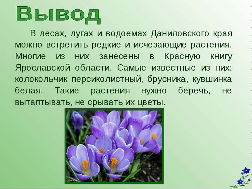 В лесах, лугах и водоемах Даниловского края можно встретить редкие и исчезающ...