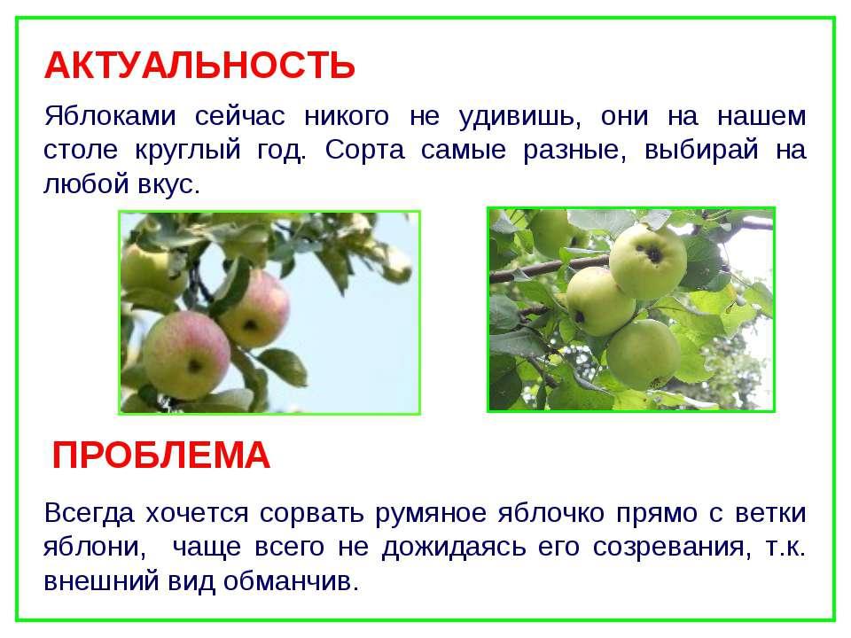 Яблоками сейчас никого не удивишь, они на нашем столе круглый год. Сорта самы...