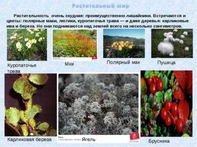 Растительность очень скудная: преимущественно лишайники. Встречаются и цветы:...