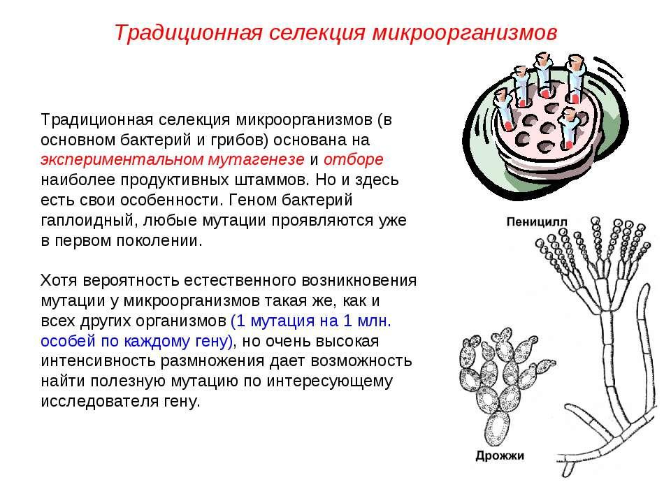 Традиционная селекция микроорганизмов (в основном бактерий и грибов) основана...