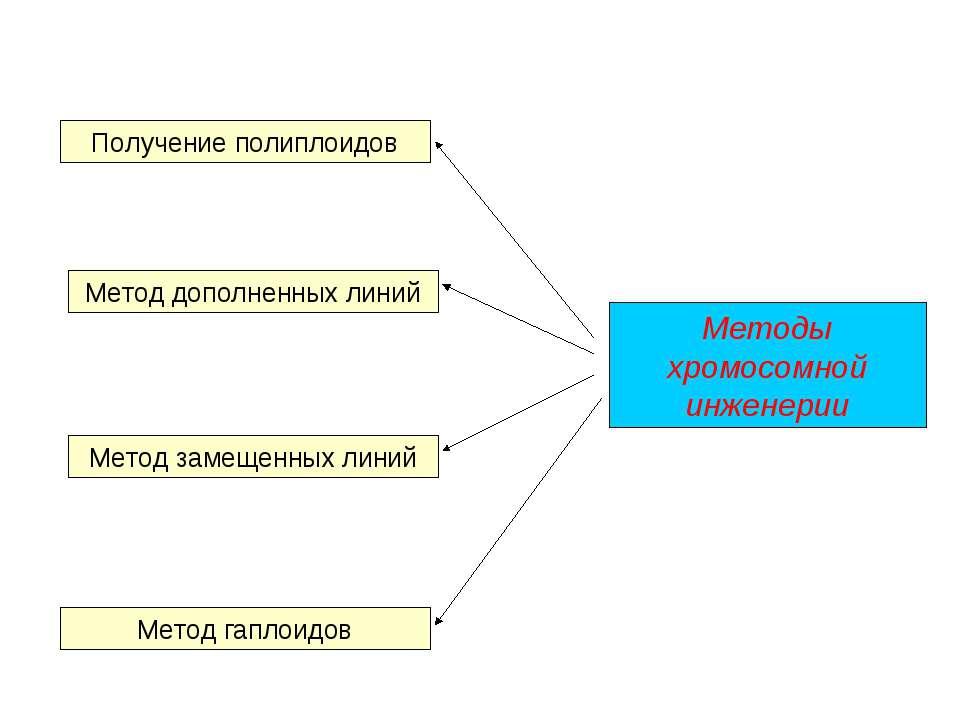 Методы хромосомной инженерии Метод дополненных линий Метод замещенных линий М...