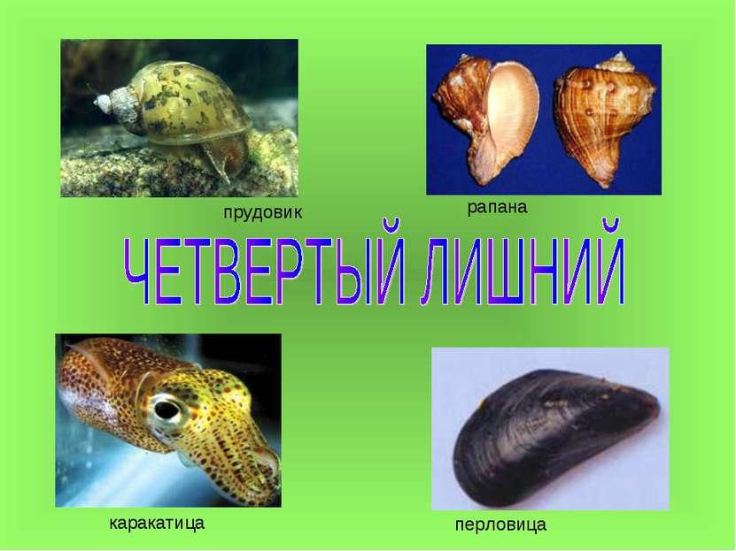 прудовик рапана каракатица перловица