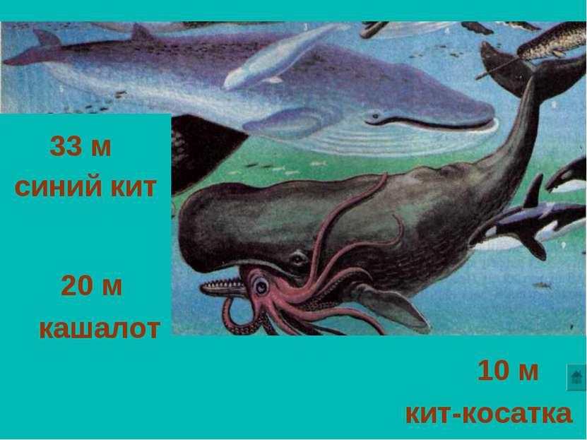 Скачать звуки синего кита
