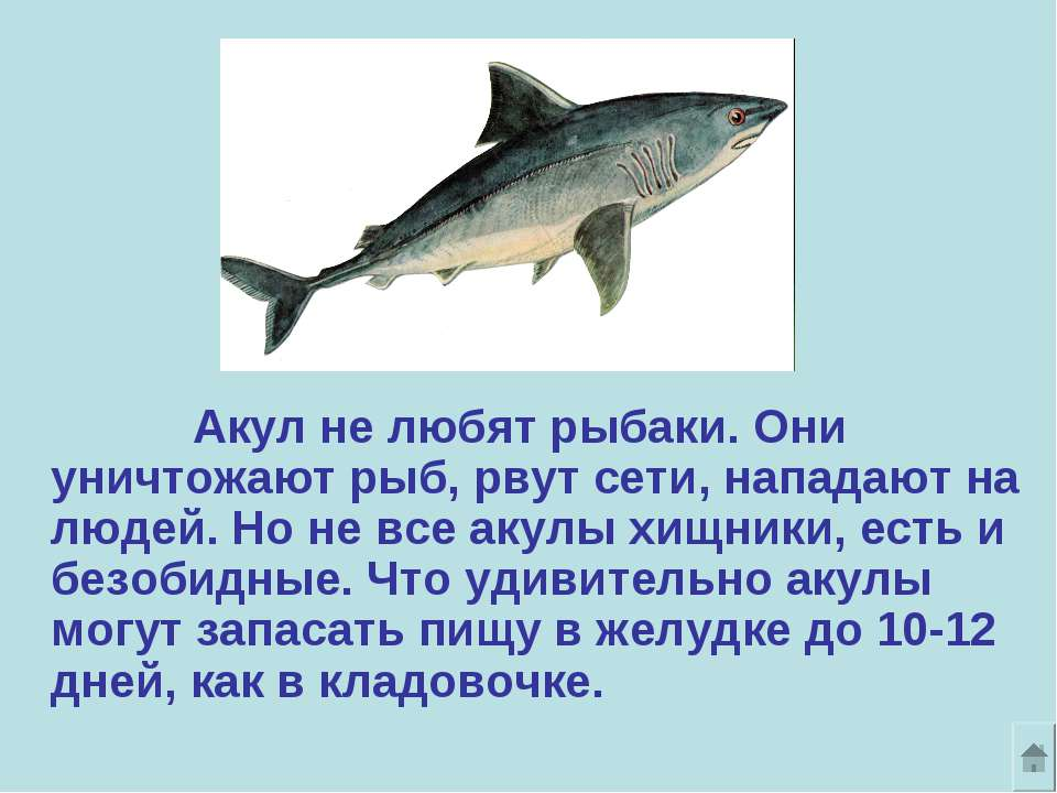 Акул не любят рыбаки. Они уничтожают рыб, рвут сети, нападают на людей. Но не...
