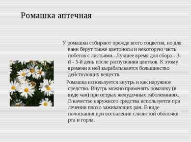 Ромашка аптечная У ромашки собирают прежде всего соцветия, но для ванн берут ...