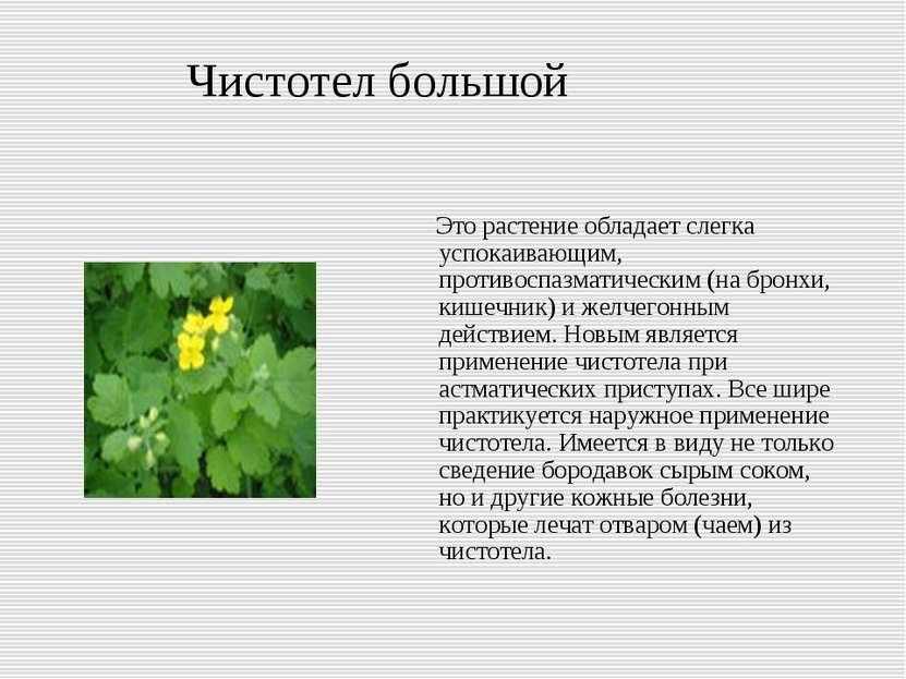 Чистотел большой Это растение обладает слегка успокаивающим, противоспазматич...
