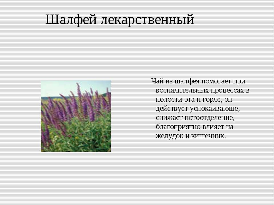 Шалфей лекарственный Чай из шалфея помогает при воспалительных процессах в по...