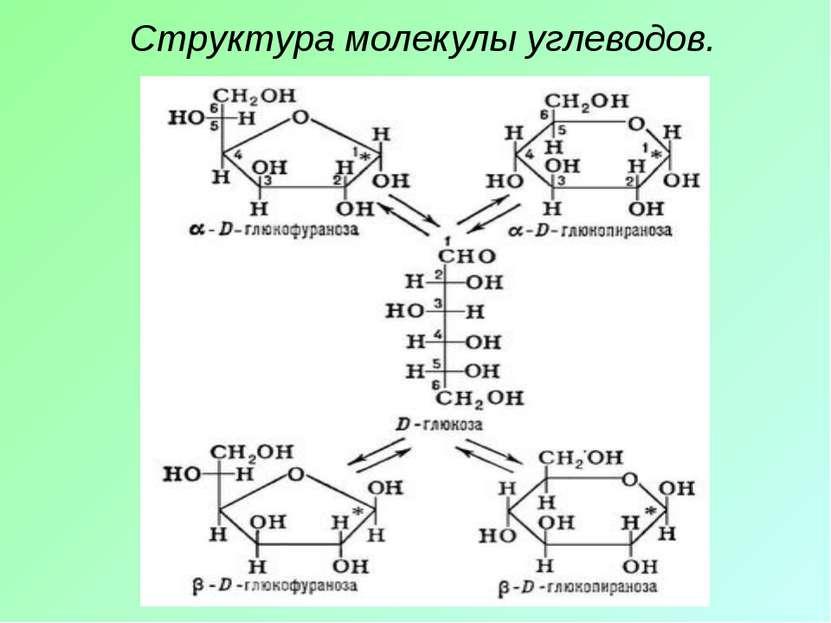 Структура молекулы углеводов.